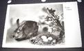 Photo Greeting Card Easter Bunny, Easter basket, flowers, ca.1950