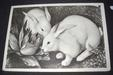 Easter greeting card, white rabbit and cabbage,, ca.1950