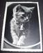 Photo Card kitten, ca.1950
