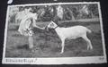 Photo Card, Girl feeding goat, ca.1940