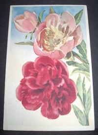 Floral greeting card, Peony in watercolor, ca.1950